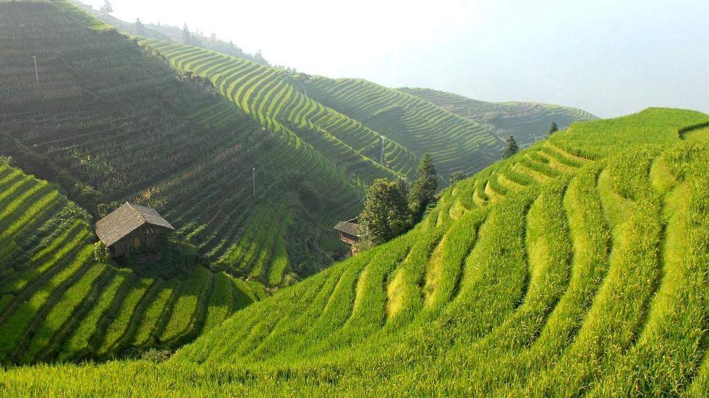 Hiina riisipõllud